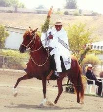 Silvano Taipe show horse