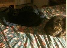 Kitty-black_Leo-Tabby-crop