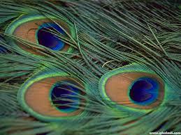 Eyespots 1