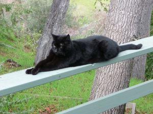 CT Sun Cat 1